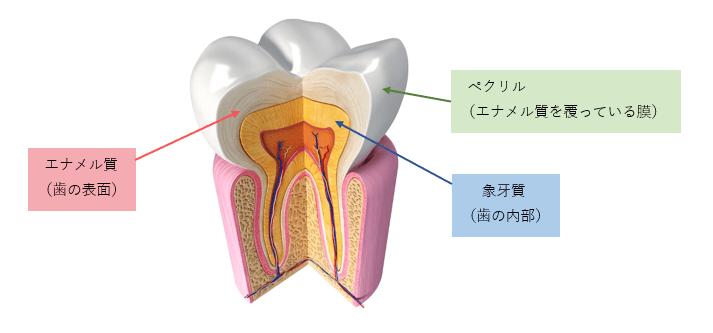 歯の黄ばみ、放ったままでいいの?綺麗で清潔な歯を心掛けよう!